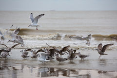 Group of Seabirds resting on the beach Stock Photography