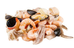 Group of seafood frozen Stock Image