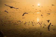 Group of Seagull are Flying over the Sea in twilight sky sunset. Time at Bangpoo, Thailand stock image