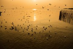 Group of Seagull are Flying over the Sea in twilight sky sunset. Time at Bangpoo, Thailand stock photo