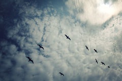 Group of seagulls above the Lake Ladoga. Aged photo. Stock Photo