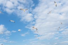 Free Group Seagulls Are Flying On The Cloud Blue Sky Stock Images - 103505964