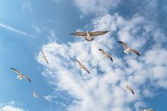 Free Group Seagulls Are Flying On The Cloud Blue Sky Royalty Free Stock Images - 103506069