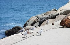 Group of Seagulls at the beach royalty free stock photography