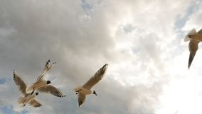 Group of seagulls fly into the sky with clouds and eat bread stock video footage