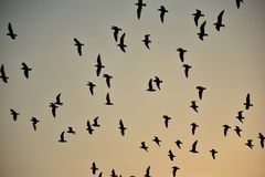 Group of Seagulls are flying in sky Royalty Free Stock Photography