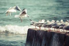 Group of seagulls Stock Photos