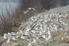 Group of seagulls on shore Stock Photography