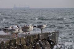 Seagulls sitting on the edge of a stone pier on a stormy day Royalty Free Stock Images