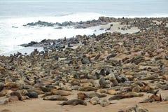 Group of seals Stock Photos