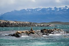 Group of seals and sea lions, Beagle Channel, Ushuaia, Argentina stock image