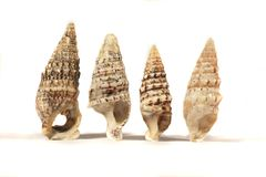 Group of seashells Stock Photography