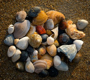 Group of seashells on beach Stock Photo