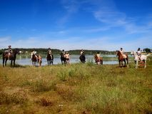 Group selfie with horses. Royalty Free Stock Photos