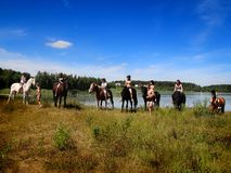 Group selfie with horses. Royalty Free Stock Photography