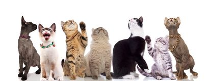 Group of seven cute cats looking up stock photography