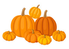 Group of seven orange pumpkins. Stock Photos