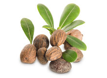 Group of Shea Nuts and leaves Stock Photography