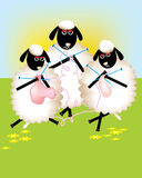 Group of sheeps. Busy knitting Royalty Free Stock Images