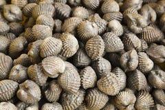 Group of Shellfish Cockles Stock Image
