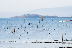 A group of shellfish gather clams. CARRIL, SPAIN - DECEMBER 12, 2015: A group of shellfish gather clams in one of the most important seafood areas in the region royalty free stock photo