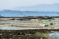 A group of shellfish gather clams. CARRIL, SPAIN - DECEMBER 12, 2015: A group of shellfish gather clams in one of the most important seafood areas in the region stock photo