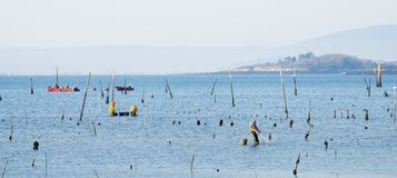 A group of shellfish gather clams. CARRIL, SPAIN - DECEMBER 12, 2015: A group of shellfish gather clams in one of the most important seafood areas in the region stock image