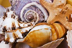 Group of Shells Stock Photography
