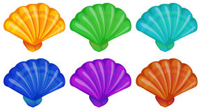 A group of shells. Illustration of a group of shells on a white background Stock Photography