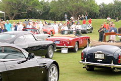 Group shot of various aston martins models Royalty Free Stock Images