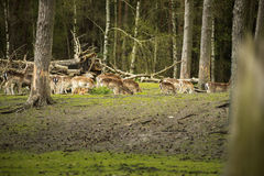 Group shy wild animals are in the woods and watch the area. Fall Stock Photo