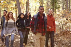 Group of six friends hiking together through a forest Royalty Free Stock Image