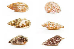 Group of six sea shell Royalty Free Stock Photography
