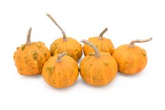 Group of six small round warty ornamental gourds. Orange with green markings, isolated on a white background Royalty Free Stock Photos