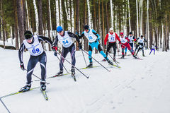 Group of skiers athletes men in forest free style uphill. Kyshtym, Russia -  March 26, 2016: group of skiers athletes men in forest free style uphill during Royalty Free Stock Photo