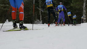 Group skiers athletes in pine forest stock video
