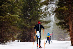 Group skiers athletes. In pine forest snowfall skiing competitions Royalty Free Stock Photography