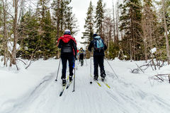 Group of skiers. In pine forest in winter classic style Stock Photography