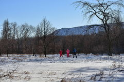 Group of skiers in the winter forest. Park Royalty Free Stock Images