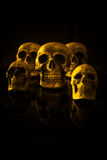Group of skulls Stock Image