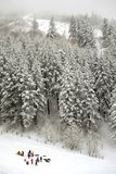 Group Sledding in Wilderness with Snow Covered Pine Trees stock photos