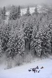 Group Sledding in Wilderness with Snow Covered Pine Trees stock photo