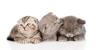 Group of sleepy baby kittens. isolated on white background Stock Photos