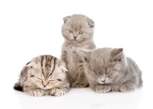 Group of sleepy baby kittens.  on white background Stock Photography