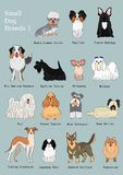 Group of small dogs breeds hand drawn chart. With breeds name stock illustration