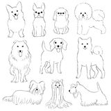 Group of small dogs. Hand drawn line art by pen stock illustration