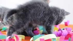 Group of small kittens playing together stock video footage