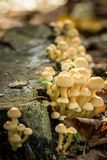 Group of small mushrooms against a tree Stock Photos
