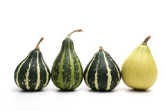 Group of small pumpkin. Isolated on white Royalty Free Stock Photography