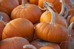 Group of small pumpkins. Shows a pile of several small pumpkins at a pumpkin patch Stock Photos